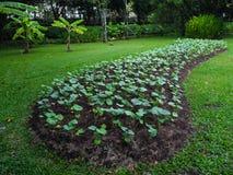 Diagrama vegetal Fotos de archivo