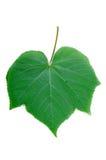 Diagrama verde da folha Foto de Stock Royalty Free
