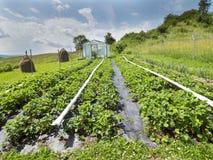 Diagramas cada vez mayor de la verdura en el área de la colina Imagenes de archivo