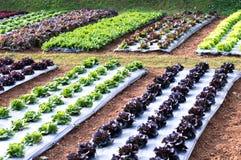 Diagramas de verduras, de ensaladas verdes y de ensaladas rojas foto de archivo libre de regalías