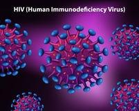 Essay on Human Immunodeficiency Virus (HIV)