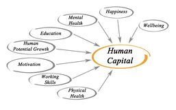 Diagramm des Humankapitals lizenzfreie abbildung
