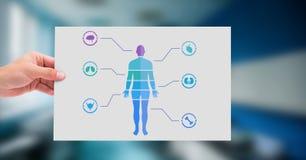 Diagramm und Hand des menschlichen Körpers, die Karte halten Stockfoto