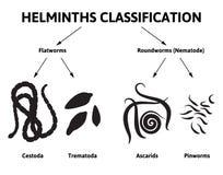Tutti i parassiti in uno stomaco della persona