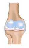 Diagramma del giunto di ginocchio Fotografia Stock
