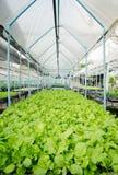 Diagramma di verdure Fotografia Stock Libera da Diritti