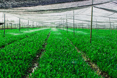 Diagramma di verdure verde Fotografia Stock