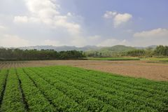 Diagramma di verdure verde sotto cielo blu, adobe rgb immagini stock libere da diritti