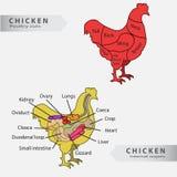Diagramme d'organes internes et de coupes de poulet de base Photographie stock