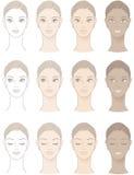 Diagramme de beau teint de femme Photos stock