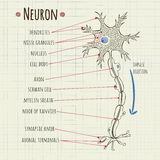 Diagramme de neurone d'illustration de vecteur Photos libres de droits