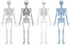 Diagramme différent de squelette humain Images libres de droits