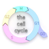 Diagramme du cycle cellulaire Photos stock