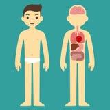 Diagramme masculin d'organe Photos libres de droits