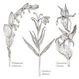 Diagrammet ställde in av de lösa blommorna royaltyfri illustrationer