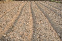 Diagrammi della verdura sul campo di agricoltura in periferia Fotografia Stock