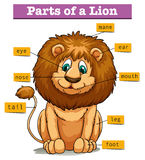 Diagramvisningdelar av lejonet vektor illustrationer
