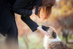 The Dialogue. A beautiful and sensual redhead girl whispering to a dog, holding its face in the palm of her hand Stock Image