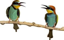 Dialogue de deux oiseaux Photos libres de droits