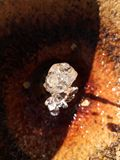 Diamant de l'eau Photo libre de droits