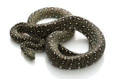 Diamant-Pythonschlange lizenzfreies stockbild