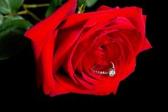 Diamant Rose Stockfotografie