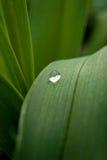 Diamant van het eerste water Stock Foto's