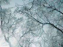 Diamantbäume sind unter der Sonne glänzend Lizenzfreie Stockfotografie