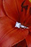 Diamante do corte da princesa na flor fotografia de stock