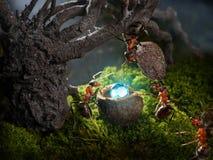 Diamante do tesouro do couro cru das formigas, contos da formiga Fotografia de Stock