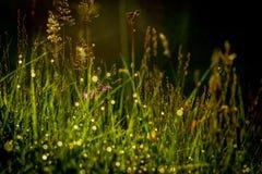 Diamanten im Gras Lizenzfreies Stockbild
