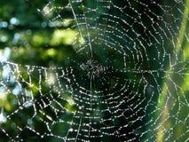 Diamanten op een Web Stock Foto's