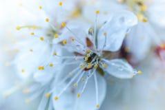 Diamantes de la lluvia Fotos de archivo