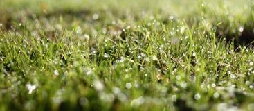 Diamantes del descenso del agua en hierba Imagen de archivo