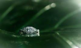 Diamantes del elefante Imagen de archivo libre de regalías