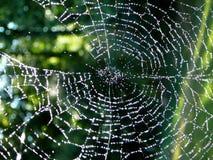 Diamantes em um Web Fotos de Stock