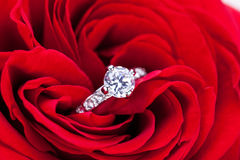 Diamantförlovningsring i hjärtan av en röd ros Arkivbild