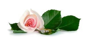 diamantförlovningsringen steg Royaltyfria Bilder