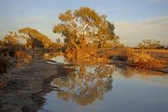 The Diamantina river at Birdsville Stock Images