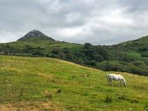 Diamon Connemara i wzgórza konik, Irlandia obrazy stock