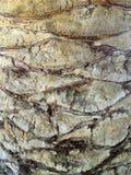 Diamond Cut Palm Bark colorido Foto de archivo libre de regalías