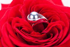 Diamond engagement ring in the heart of a red rose Royalty Free Stock Photos