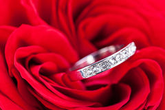 Diamond engagement ring in the heart of a red rose Royalty Free Stock Images