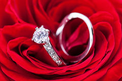 Diamond engagement ring in the heart of a red rose Stock Images