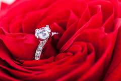 Diamond engagement ring in the heart of a red rose Stock Image
