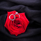 Diamond engagement ring in the heart of a red rose Stock Photos