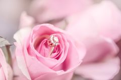 Diamond engagement ring into a pink rose. Defocus texture Valentine`s Day background with diamond engagement ring into a pink rose royalty free stock photos