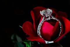 Diamond Engagement Ring On Red Rose Platinum Pave foto de archivo libre de regalías