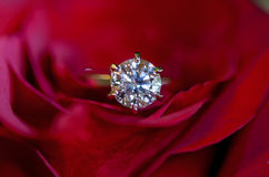 Diamond Engagement Ring in Red Rose Royalty Free Stock Image