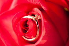 Diamond golden ring on the red rose petals Royalty Free Stock Photography